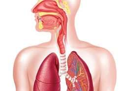 Marijuana's Effects on the Lungs