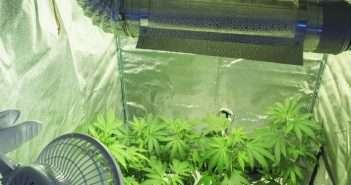 Avoiding Insects in Indoor Marijuana Gardens